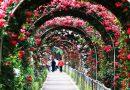 Lễ hội hoa hồng công viên Thống Nhất